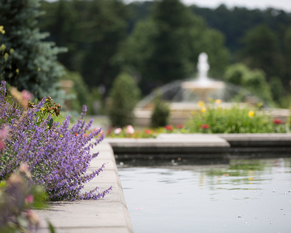 Fountain surrounded by flowers in formal garden